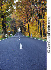 Road in forest, autumn