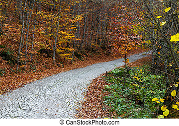 Road in Forest in Autumn