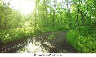 Road in forest spring