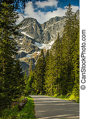 Road in forest with high mountains in back