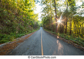 Road in Forest with the sun behind