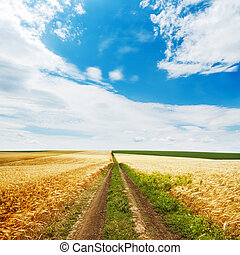 road in golden field and blue sky with clouds over it