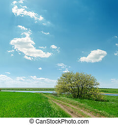 road in green grass near tree and blue sky with clouds