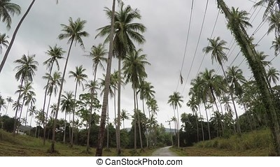 Road in jungle with palms