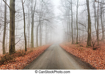 Road in misty forest at fall
