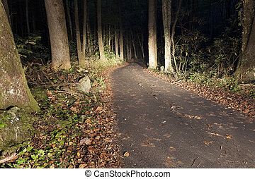 Road in Smoky Mountains