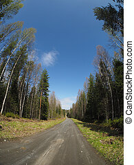 road in spring forest