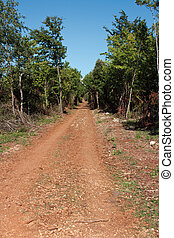 Road in subtropical forest
