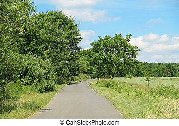 road in summer landscape