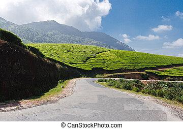 Road in tea plantations. Munnar, Kerala