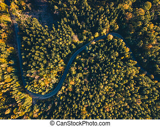 Road in the autumn forest aerial view
