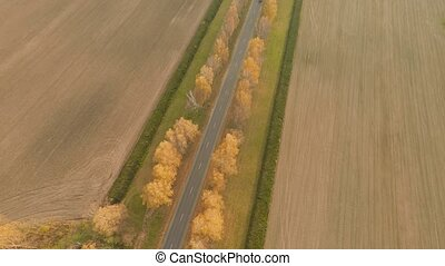 Road in the autumn forest aerial view. Russia.