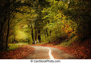 Road in the autumn forest. Fall llandscape with fallen leaves. Blurred image