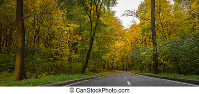 Road in the autumn forest, yellow leaves on the asphalt and trees background