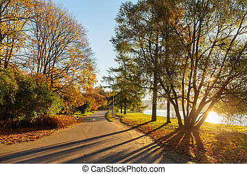 Road in the autumn park
