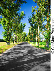 road in the avenue