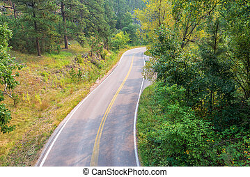 Road in the Black Hills