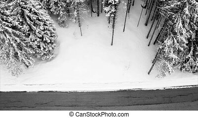 Road in the coniferous forest - rural landscape snowy road...