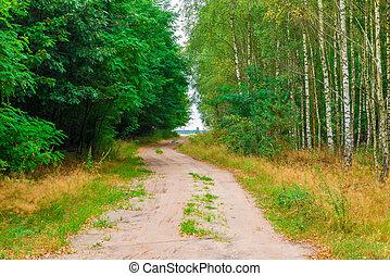road in the countryside in a summer forest