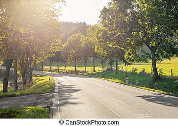 Road in the countryside with trees. Autumn landscape at sunset