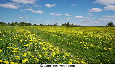 Road in the dandelion field