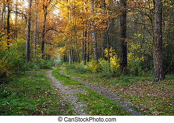 Road in the fall forest