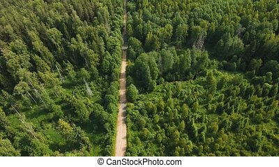Road in the forest.