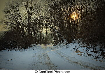 road in the forest at dawn