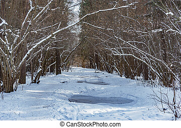 Road in the forest at winter day time.