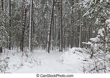 Road in the forest covered with snow on a winter day