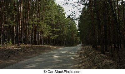 Road in the forest disappearing into the distance.