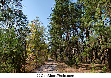 road in the forest on an autumn day