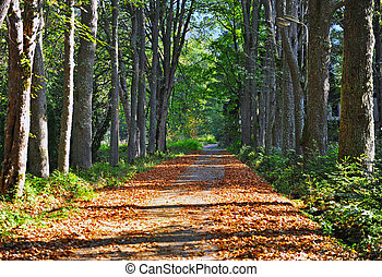 Road in the forest on autumn