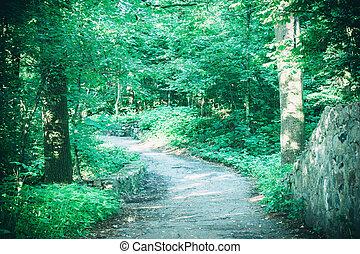 Road in the forest park in the spring