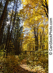 Road in the golden forest_
