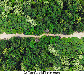road in the green forest. aerial view