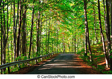 road in the green forest