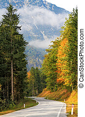 Road in the mountains of pines
