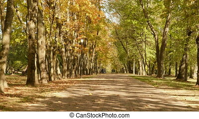 Road in the park. Autumn daytime. Smooth dolly shot