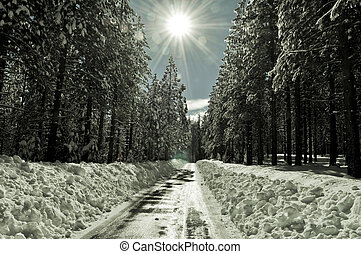 Road in the Snow with Solar Flare