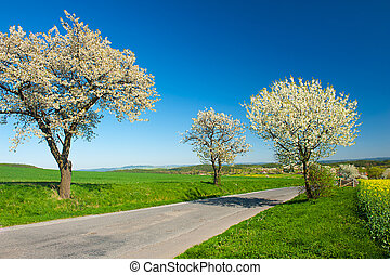 Road in the Spring