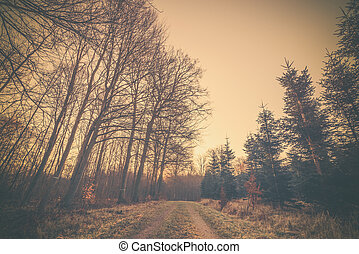 Road in the sunset in a forest