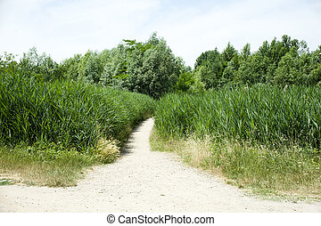 Road in the vegetation, Parco delle cave in Milan