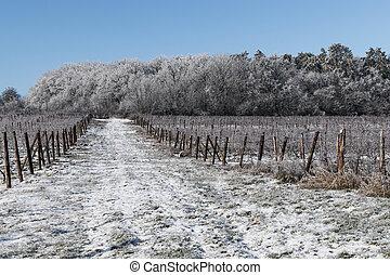 Road in the vineyard