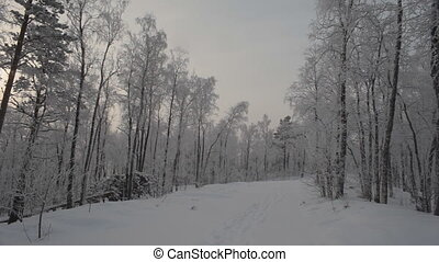 Road in the Winter Forest