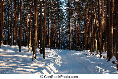 Road in the winter forest. Sunbeams and shadows of trees.