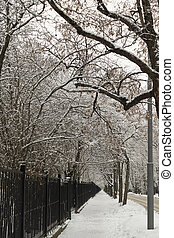 Road in the winter in park
