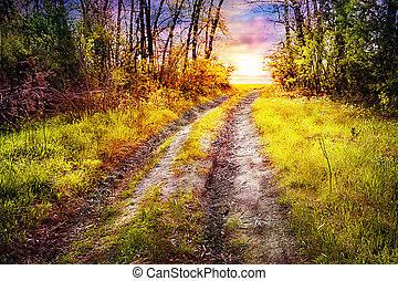 Road in the woods coming out to the setting sun