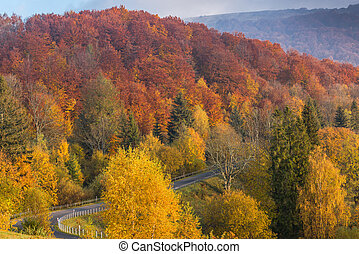 Road in wild Bieszczady mountains at fall