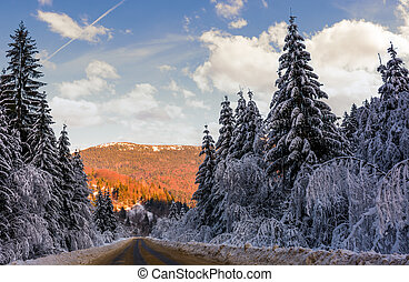 road in winter spruce forest. beautiful nature scenery in...